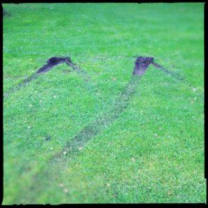 Reifenspur auf Gras, die wie ein M aussieht.
