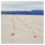 In einer arktischen Gerölllandschaft wächst auf den Spuren eines Fahrzeugs spärliches Gras