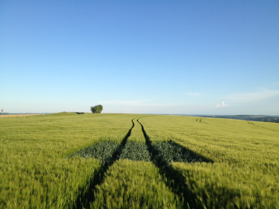 Dunkelgrüne, etwa sechs mal sechs Meter große quadratische Fläche jungen Getreides in einer etwas helleren Getreideart. Eine Traktorspur fluchtet zum Horizont. Ein kleiner Baum unter blauem Himmel ist im Hintergrund zu sehen.