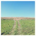 Traktorspur, die ein Feld hinaufführt und sich über einen abgeernteten Acker am Horizont im blauen Himmel verliert.