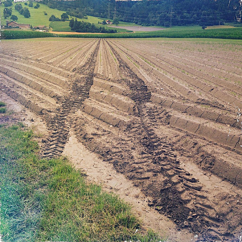 Traktorspur führt schräg durch ein frisch gehäufeltes Spargelfeld. Im Hintergrund ein Hof und Wäldchen.