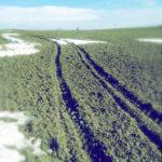 Blick auf eine Traktorspur, die in sanfter linksbiegung über einen Acker mit Schneeplacken führt.