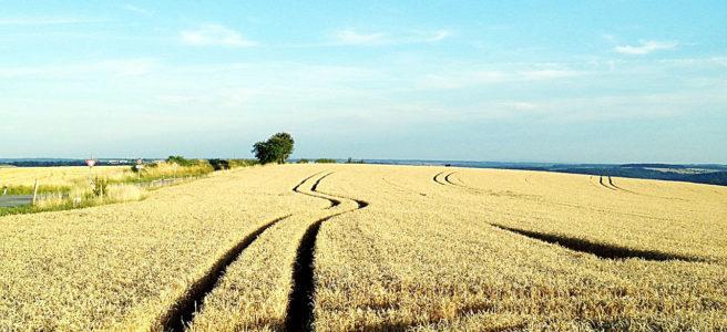 Ein reifes Getreidefeld bis zum Horizont. Tiefscharz furchen die Spuren der bearbeitenden Traktoren im Licht von Links. In der Mitte ein rechts-links-Schlenker