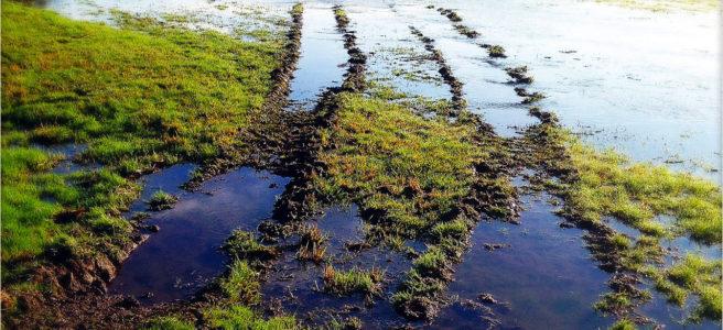 Eine breite Spur eines Traktors führt geschwungen durch eine überflutete Wiese. Im Wasser spiegelt sich blau der Himmel und mischt sich mit den grünen Grasflecken.