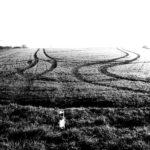 Zwei gegenläufige Traktorspuren auf fast schwarz-weißem, noch nicht sehr hoch bewachsenem Acker wirken wie Tanz in Rechts-Links-Schlingern auf den weißen Horizont hinzu.